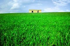 дом травы зеленая стоковые изображения