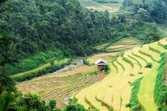 Дом ходулей на хранят террасах риса, который Стоковое Изображение RF