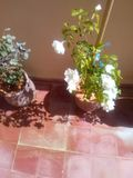 Дом цветка Стоковая Фотография RF
