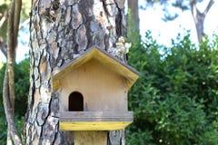 Дом для белки на дереве Стоковая Фотография RF