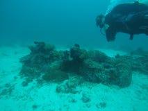 Донут коралла Стоковые Изображения