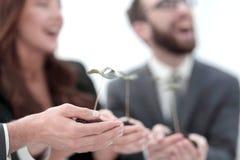 дополнительная форма дела предпосылки команда дела держит первые всходы в своих руках стоковое изображение rf