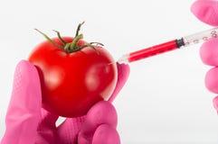 Доработанный томат Стоковое Фото