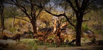 Дорогая жизнь леса Стоковая Фотография