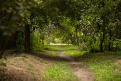 Дорога Тhe через лес в расстоянии Стоковые Изображения RF