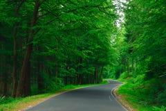 Дорога асфальта замотки в лесе Стоковая Фотография RF