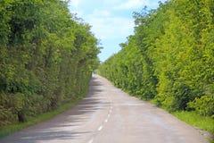 Дорога асфальта и зеленые обочины с кустами пустой хайвей стоковая фотография rf