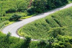 Дорога асфальта через зеленое поле и облака на голубом небе в летнем дне Стоковое Изображение