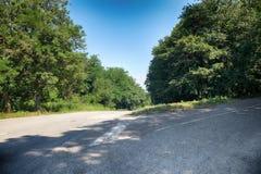 Дорога асфальта через лес стоковые фотографии rf