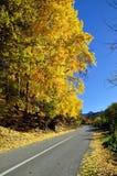 Дорога асфальта в красивой осени Стоковая Фотография RF