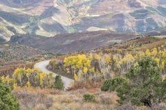 Дорога бака кофе с золотой осиной Стоковые Фотографии RF