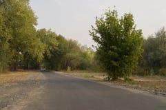 Дорога бежать через предыдущие деревья падения зеленых и желтых цветов Ландшафт Стоковая Фотография RF