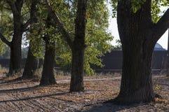 Дорога бежать через предыдущие деревья падения зеленых и желтых цветов Ландшафт Стоковое фото RF