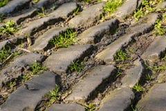 Дорога булыжника Фландрии - деталь стоковые изображения rf