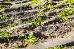 Дорога булыжника Фландрии - деталь стоковая фотография