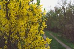 Дорога весны стоковое изображение