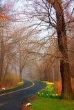 дорога ветреная Стоковые Фотографии RF