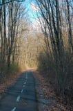 Дорога велосипеда в древесинах Стоковые Изображения RF