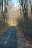 Дорога велосипеда в древесинах Стоковое Изображение