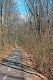 Дорога велосипеда в древесинах Стоковые Фотографии RF