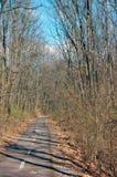 Дорога велосипеда в древесинах Стоковое фото RF