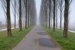 Дорога велосипеда между строками дерева в тумане Стоковая Фотография