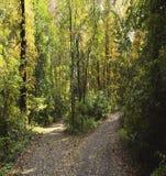 дорога вилки Стоковая Фотография