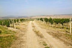 Дорога виноградника Стоковые Фото