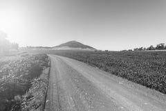 Дорога водя к держателю Табору стоковая фотография