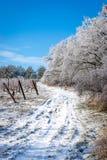 Дорога вокруг виноградника Стоковое Изображение RF