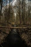 Дорога воды через лес стоковое изображение rf