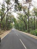Дорога вполне деревьев стоковое изображение rf