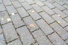 Дорога вымощенная камней кирпича осенью Мостить предпосылку Стоковые Изображения RF
