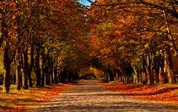 Дорога вымощенная осенью в желтых листьях стоковое изображение
