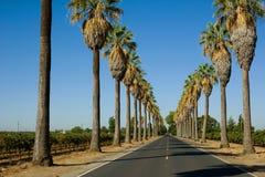 Дорога выровнянная в пальмах Стоковые Изображения RF
