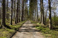 Дорога выровнянная деревом. Стоковое Изображение