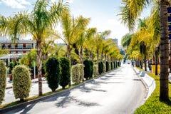 Дорога выровнянная с пальмами Стоковое Изображение RF