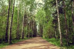 Дорога выходя в расстояние в виньетке кроны дерева Длинний путь Стоковая Фотография RF