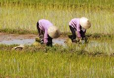 дорога Вьетнам риса halong поля залива Стоковое Изображение