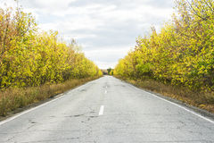Дорога в ландшафте осени леса стоковая фотография