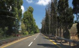 Дорога в бульваре сосны стоковые изображения rf