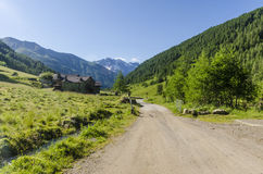 Дорога в высокогорном ландшафте луга высоких гор на ясном лете, солнечном дне. Стоковые Изображения RF