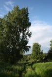 Дорога в высокой траве стоковые фото