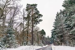 Дорога в горах Вогезы в зиме Отдел Bas-Rhin Франции Стоковые Изображения RF