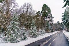 Дорога в горах Вогезы в зиме Отдел Bas-Rhin Франции Стоковое Изображение