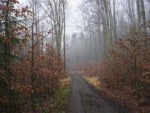 Дорога в дереве туманного леса осени чуть-чуть и Ла листьев апельсина унылом Стоковое Изображение RF