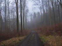 Дорога в дереве туманного леса осени чуть-чуть и Ла листьев апельсина унылом Стоковое фото RF