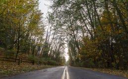 Дорога в древесине с цветом падения Стоковое Фото