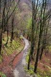 Дорога в древесине стоковая фотография