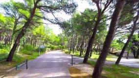 Дорога в лесе - взгляде dashcam сток-видео